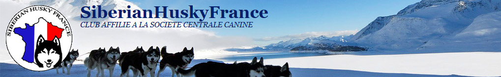 S.H.F    Siberian  Husky  France